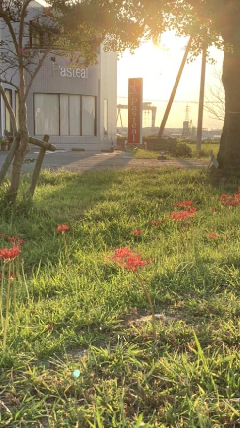 季節の花💐
